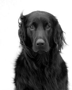 Beautiful photograph, The soulful one, by Jim Dratfield, @ Dog & Horse fine Art, Charleston, SC