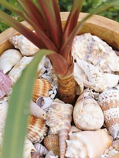 Seashells - Choosing Container Mulches on HGTV