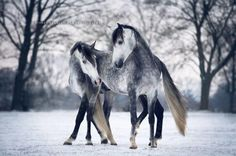 Photographer Follows Her Dream To Capture Stunning Moving Portraits Of Horses http://www.wimp.com/photographer-follows-dream-to-captures-stunning-moving-portraits-of-horses/