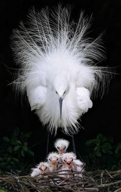 ⓕurry & ⓕeathery ⓕriends - photos of birds, pets & wild animals - Egret by John&Fish