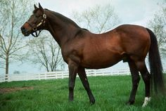 1943 Triple Crown winner Count Fleet at a stud farm in Kentucky at age 25. He would live to be 33 years old.