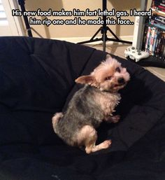 He knows exactly what he's doing - funny pictures #funnypictures