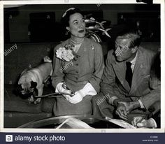 Download this stock image: Apr. 04, 2012 - Duke of Duchess of Windsor and their pug dog trooper leaving for France abroad to United States. - E1456K from Alamy's library of millions of high resolution stock photos, illustrations and vectors.