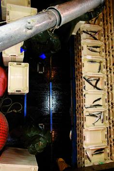 """Gaztezuloren 96. alean Patxi Urangak Getariako Santana Berria baporean baxurako arrantzaleen ofizioa ezagutzen igarotako 24 orduetan ateratako argazki bilduma argitaratu genuen: """"Erria Txikotak!""""."""