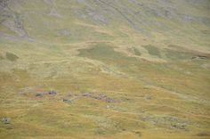 Sheep on a mountain at the Fairy Pools.