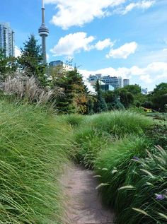 The Toronto Music Garden, Toronto, Ontario.