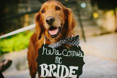 6 Adorable ways to Include your Dog at Wedding Ceremony - PaperStudioByC Dog Cake Topper Wedding, Wedding Dress Cake, Wedding Dresses, Dog Wedding, Wedding Signs, Dream Wedding, Wedding Goals, Wedding Ceremony, Wedding Ideas