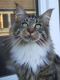 FLOCON - vedette de notre CONCOURS Photo mensuel chat, chien, animaux. participez ici >> http://www.verlina.com/concours-photo.php