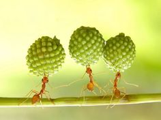 SUPER ANT  © Eko Adiyanto    Ants not so nasty if they stay outside,and out of my garden,and house Hahaha