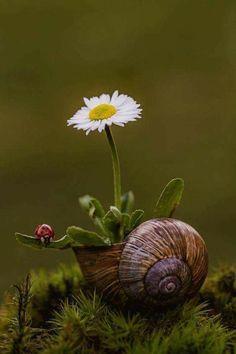 A imagem pode conter: flor, planta, natureza e atividades ao ar livre