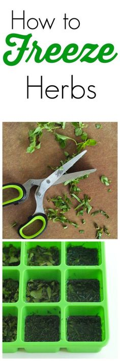 How to Freeze Fresh Herbs.  This is a great idea if you are growing fresh herbs and have a ton of them! Or if a recipe calls for a little bit and you have to buy the whole container.  Don't waste them--freeze them! Here's how to do it.