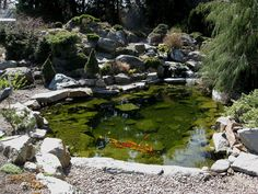 Exterior, Natural Theme Decoration For Garden With Simple Pond: Things You  Should Look At To Construct A Pond