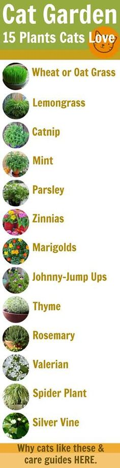***If I ever had a catio, I would plant some of these for my cat/s.***