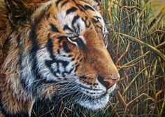 "Wildlife Art ""Perceptive Path"": Realistic Acrylic painting of a tiger portrait. By Dominique Wilkins. Dominique Wilkins, Wildlife Art, Figurative Art, Paths, Fine Art, Portrait, Tigers, Artist, Painting"