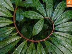 jungle caribbean plants - Google Search