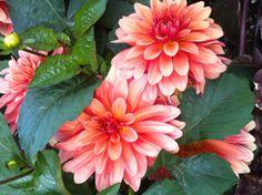 More Beautiful Alaska flowers