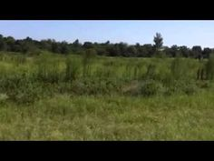 Florida Land Network 5 Acres Paved Road Beautiful Subdivision www.northf...