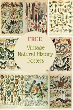 Free to download and print high resolution vintage Natural History Poster of Adolphe Millot.