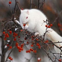 Beautiful albino squirrel. Love the colors! There are, for some reason, albino squirrels in our neighborhood in Hershey, Pa.: