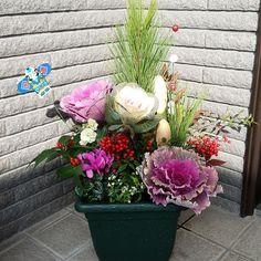 Entrance/寄せ植え/葉牡丹/お正月/アリッサム/ガーデンシクラメン...などのインテリア実例 - 2018-01-04 12:58:32   RoomClip (ルームクリップ) Container Gardening, Floral Wreath, Clay, Wreaths, Flowers, Plants, Inspiration, Home Decor, Christmas