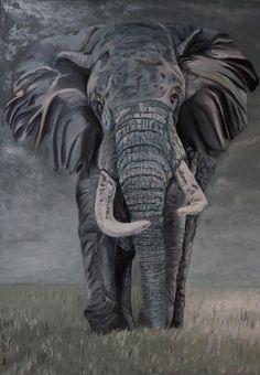 African Elephant African Elephant, Wall Art, Animals, Animales, Animaux, African Bush Elephant, Animal, Animais, Wall Decor