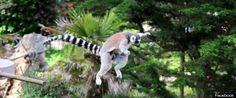 zooanimals - Google Search