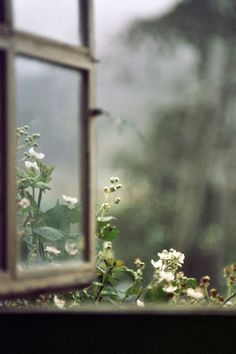 """I used to sit by the window on rainy days and just breathe in the breeze. Watch the flowers grow."""