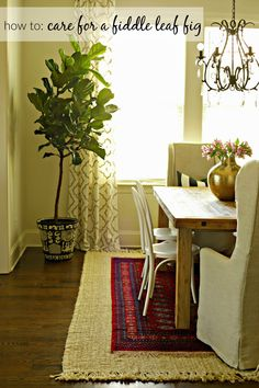 "I have to admit, there was a bit of a learning curve here as I've never considered myself someone with a ""green thumb"". But as you know I'm team real plants, and I was comp… Bring Them Home, Fiddle Leaf Fig, Real Plants, Ficus, Low Lights, Plant Decor, Houseplants, Indoor Plants, House Tours"