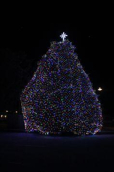 Manteo Christmas Tree Lighting    https://plus.google.com/photos/114038799995955542387/albums/5817749518413901201