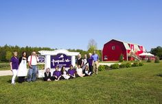 Washington Island, Door County.  Lavendar fest lavender 7-15