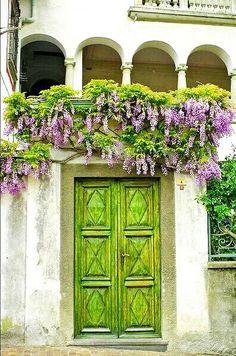 wisteria over green doors