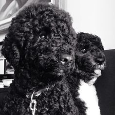 Bo and Sunny in Classy Black and White