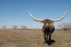 Galerie [1]: Texas [Diverse] | Pit's Bilderbuch