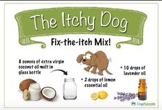 Yeast Issues....cure for your itchy dog