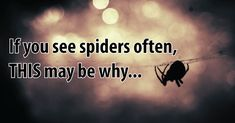 Are you seeing spiders all the time? Whenever something shows up repetitively in your life, you should take this as a signal from the Universe that you...