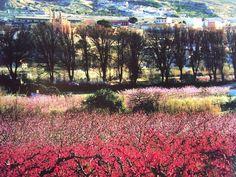 Image result for la floración cieza