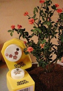 miniature rosebush how-to
