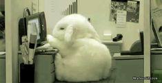 bunny-sleep-work