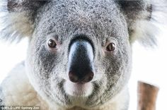 The iconic Aussie creatures also proved to be talented 'photographers'