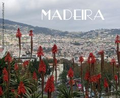 Madeira has something for everyone And Professor M and I like it, too. After all, this wasn't our first time here. Now, if we were athletic outdoor people, Madeira would… Seattle Skyline, Professor, About Me Blog, Posts, Athletic, Elegant, Travel, Outdoor, Wood