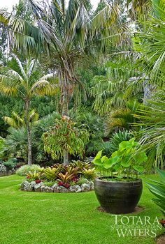 Lotus Bowl at Totara Waters Sub-Tropical Garden - Garden Stay Accommodation - New Zealand