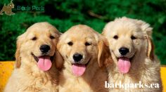 The Bark Park Foundation offers urgent medical care funds to dogs who are lives without the home. Your contribution can save their important life to receive necessary medical treatment.To get more information, Visit at http://barkparks.ca/ or contact us at 1-877-477-5597