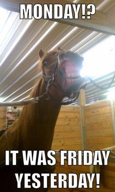 Lol! Horse meme/horse humor, funny horse, arabian, goofy, equestrian