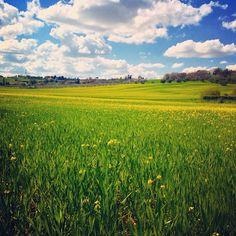 Giallo come la primavera..i colli di #Rimini in fiore - Instagram by ariannapruccoli