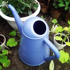 De butler van Xala in blue! @groenfabriekje (instagram)