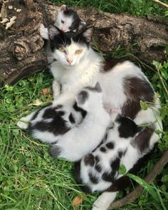 .momma kitty & kittens♡.