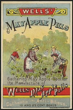 Wells' May Apple Pills - gathering may apple root for the manufacture of Wells' May Apple Pills (front) Retro Advertising, Vintage Advertisements, Fine Art Prints, Canvas Prints, Framed Prints, Binder Labels, Medicine Notes, Vtc, Boston Public Library
