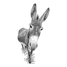 Donkey Pen and Ink Drawing. They always look at you like this. Dotted Drawings, Ink Pen Drawings, Animal Sketches, Animal Drawings, Donkey Drawing, Stippling Art, Burritos, Crayon, Pictures To Draw