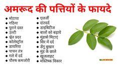 अमरूद की पत्तियों के फायदे - All Ayurvedic Home Health Remedies, Natural Health Remedies, Herbal Remedies, Ayurveda, Ayurvedic Healing, Health And Fitness Tips, Health Diet, Health And Wellness, Interesting Facts In Hindi