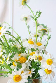 Relax with a cup of Chamomile Tea with with Chamolile grown in the garden.